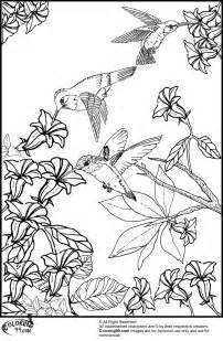 hummingbird coloring page hummingbird coloring pages minister coloring