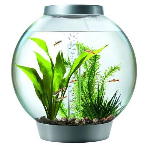 Clear Round Vase 13 Fish Bowl And Aquarium Design For Fish Lover Design Swan