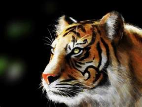 animal painting free tiger wallpaper and background 1365x1024 id 74673