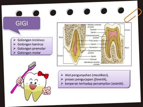 Proses Pemutihan Gigi karies gigi presentation