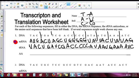 Translation Practice Worksheet by Uncategorized Transcription And Translation Worksheet