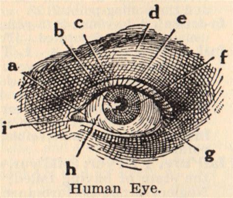 vintage diagram vintage clip eye diagram the graphics
