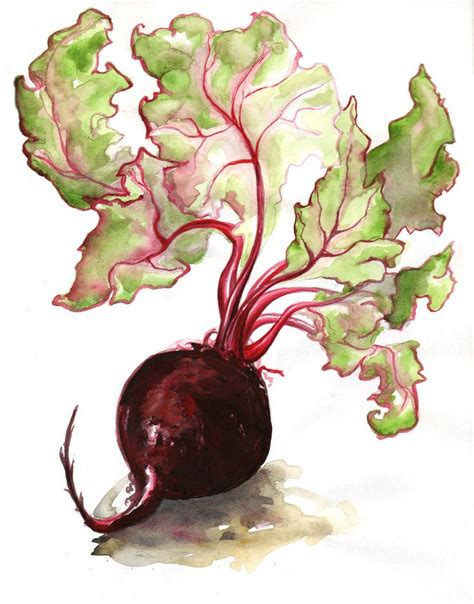 watercolour fruit vegetable 17 best images about watercolor vegetable on cabbages watercolour and watercolor