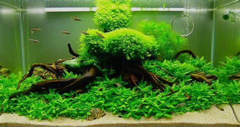 tutorial  membuat tanaman hias   aquarium