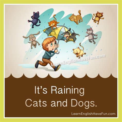 its raining cats and dogs raining cats and dogs idiom