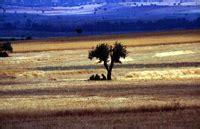 Rigi Maroon landscape woods forests paesaggio entroterra natura
