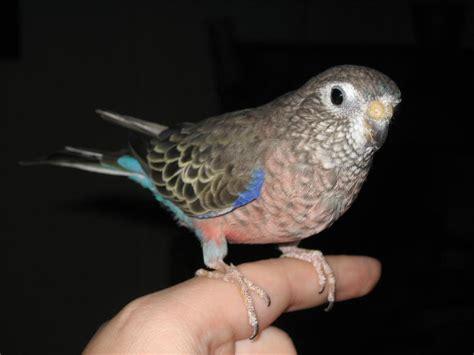 whidbey island wa whidbey birds