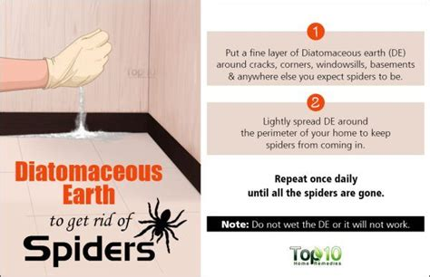how to keep spiders out of basement how to safely get rid of spiders from your house top 10