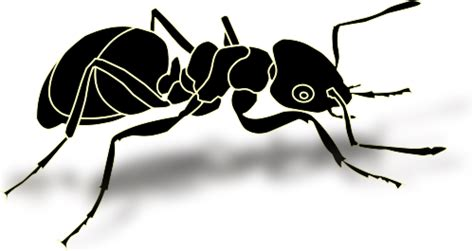 ant bold animals bugs ant ants 2 ant bold png html