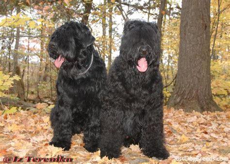 russian breeds russian breeds breeds