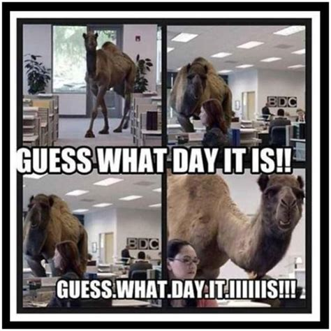 geico camel commercial hump day 17 best images about wednesday hump day on pinterest