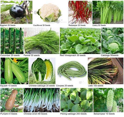 Organic Vegetable Garden Seeds Non Gmo Garden Seeds Smalltowndjs