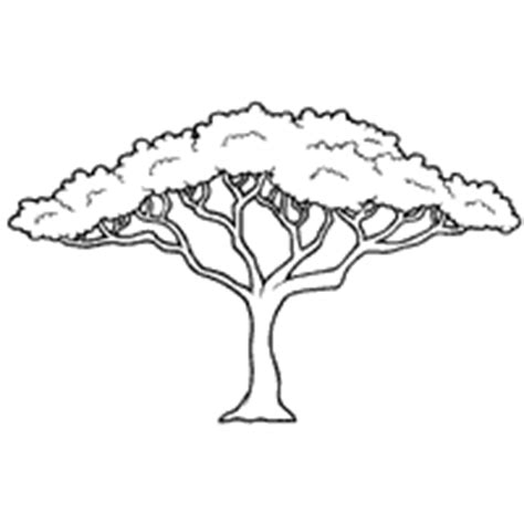 acacia tree 187 coloring pages 187 surfnetkids