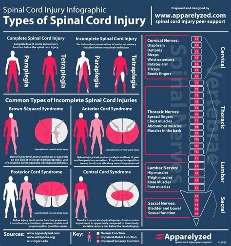 Types Of Mba School Cords by Rehabathome Types Of Spinal Cord Injury Sci Typical