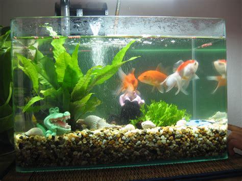 Hiasan Akuarium Coral Anemon S picture of fish on animal picture society
