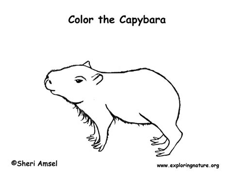 Capybara Coloring Page Capybara Coloring Page