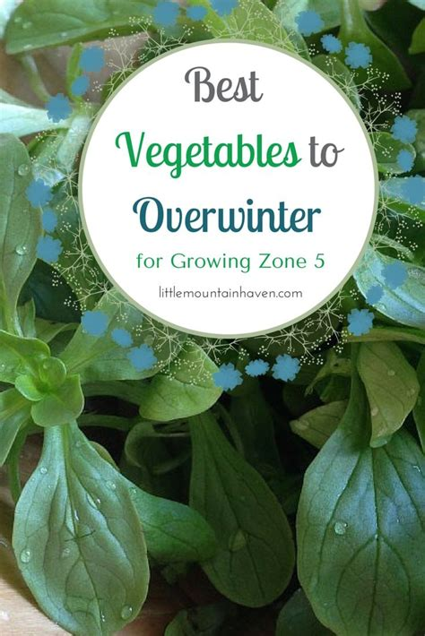 vegetables zone 5 17 best images about gardening in zone 5 on