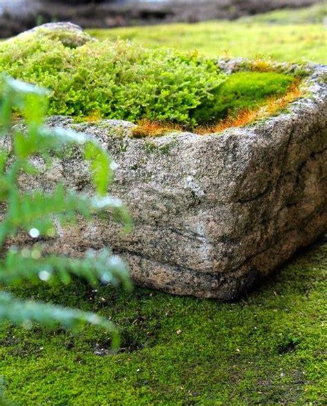 fern rock garden apartments pot filled with a golden moss fern and moss