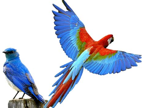 bird l g l p bird park