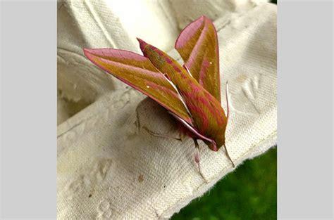 moths treborth botanic garden bangor