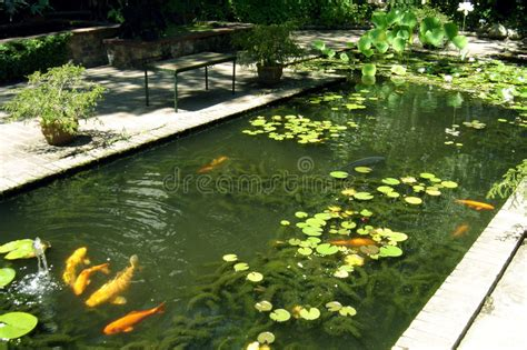 giardino koi giardino 02 di koi fotografia stock immagine di