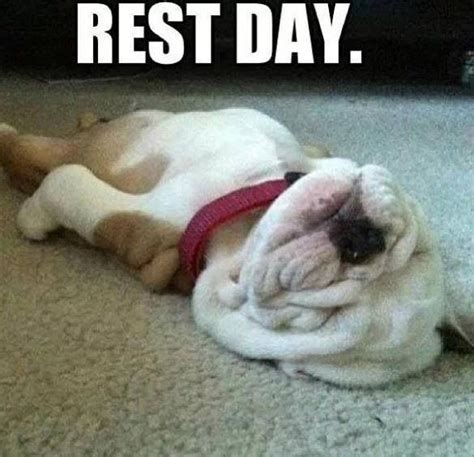 Rest Day Meme - rest day funny fitness quotes quotesgram