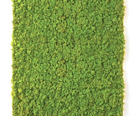 moss wall living green walls from verde profilo