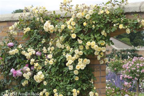 Mehrjährige Pflanzen Garten Winterhart by Schnell Wachsende Blumen Schnell Wachsende Blumen Schnell