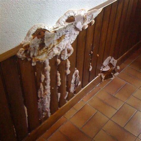 Produit Contre Moisissure Mur by Traitement Du Salp 234 Tre M 233 Rule Et Moisissures Sur Mur Humide