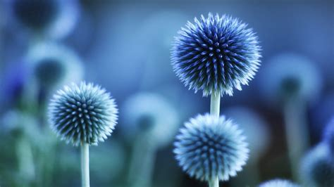 hd wallpaper for android flower blue flower hd wallpapers