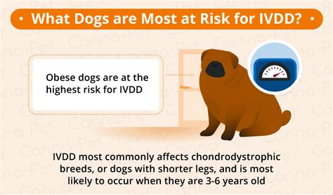 Chair Disc Intervertebral Disc Disease Ivdd In Dogs Canna Pet