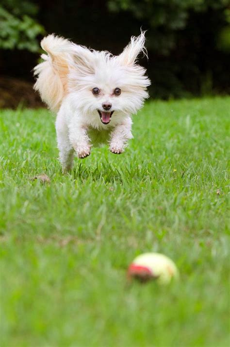 maltese puppy names maltese names for your or maltese and animal