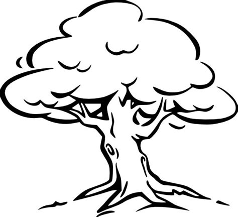 oak tree coloring page for kids color luna