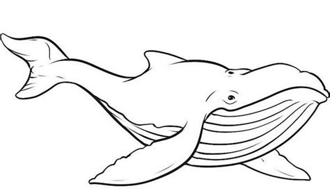 whale coloring page whale free colouring pages