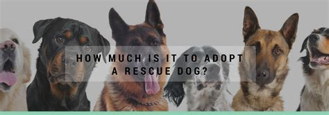 how much is it to adopt a puppy how much is it to adopt a rescue matters