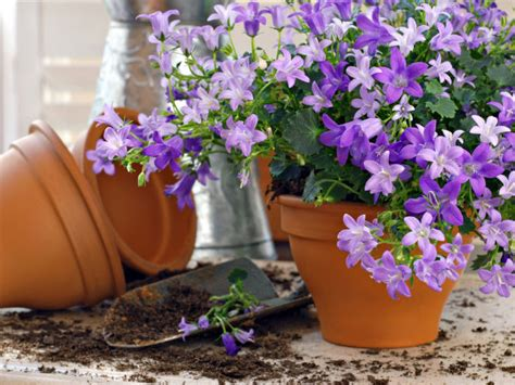 flower gardening tips for beginners boldsky