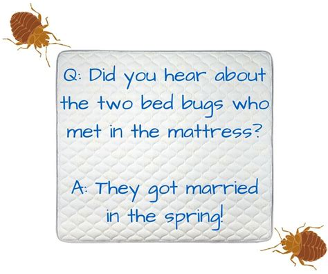 futon jokes bed bug joke bugpun insects fridaybugfun bug