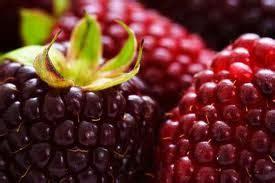 alimentos ricos en antioxidantes freealfin