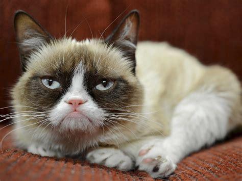 grumpy cat grumpy cat has earned owner nearly 100 million in