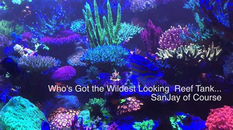 who s got the best bioluminescing reef tank sanjay of