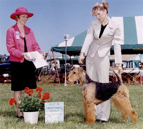 Never Say Never Sweepstakes - joval airedales breeder of top quality airedale terriers in northern virginia