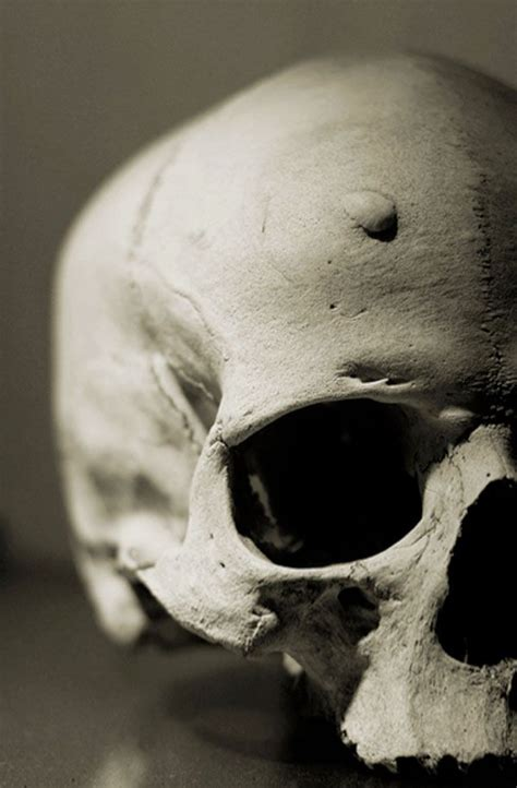 up skulls photography