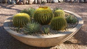 desert gardening tough container plants for patios