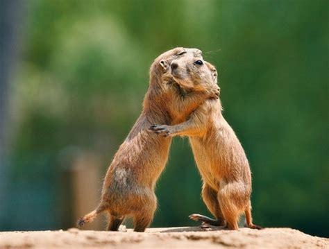 imagenes animales abrazados 25 im 225 genes de animales abraz 225 ndose bast 237 simo