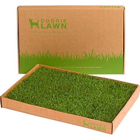 real grass potty real grass patch potty mugwomp