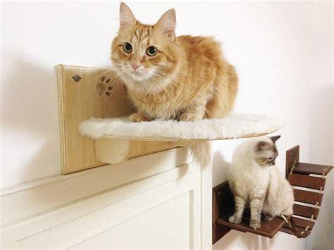 arredamenti gatto la casa ideale per i gatti consigli per l arredamento