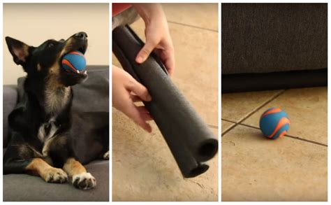 protect sofa from dogs one easy diy move keeps your dog s toys from getting lost