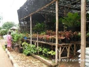 Lu Hias Batok Kelapa sentra tanaman kelapa gading lumayan ranum 2