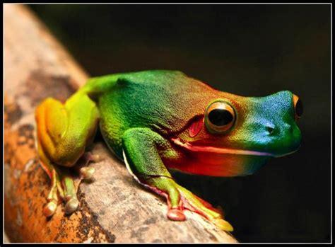 imagenes de ranas blancas im 225 genes del mundo animal ranas