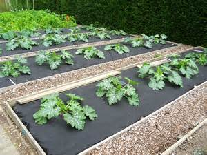 Easy Raised Garden Beds - garden beds squash harvest to table